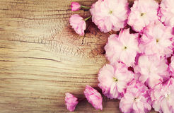 Cherry Blossom on Old Wooden Background Stock Photos