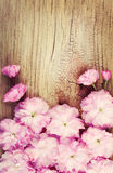 Cherry Blossom on Old Wooden Background. Sakura in Spring Royalty Free Stock Image