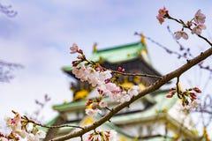 Cherry Blossom, Osaka Castle royalty free stock photography