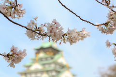 Cherry blossom in Osaka castle, Osaka, Japan Stock Photography