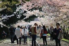 Cherry Blossom på den Keage sluttningen, Kyoto i Japan Arkivfoto