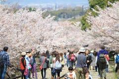 Cherry Blossom på den Keage sluttningen, Kyoto i Japan Royaltyfri Bild