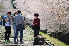 Cherry Blossom på den Keage sluttningen, Kyoto i Japan Fotografering för Bildbyråer
