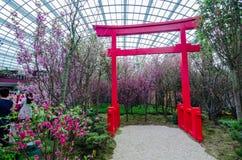 Cherry Blossom på trädgården vid fjärden Royaltyfri Bild