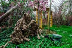 Cherry Blossom på trädgården vid fjärden Royaltyfri Fotografi