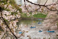 Cherry blossom park. TOKYO, JAPAN-1, APRIL, 2013: People enjoy cherry blossom at tokyo, Japan Royalty Free Stock Photos
