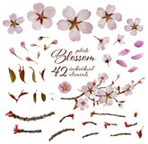 Cherry Blossom Parts. Isolated photographic cherry blossom elements Royalty Free Stock Photo