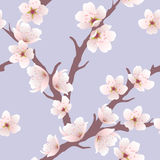 Cherry blossom pattern, vector  Stock Images