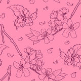 Cherry blossom pattern Royalty Free Stock Photos