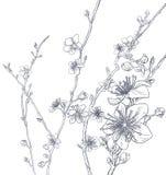 Cherry Blossom Peach Flowers Background modell royaltyfri illustrationer