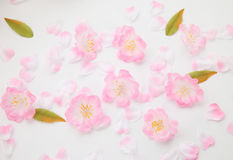 Cherry blossom petals Stock Photos