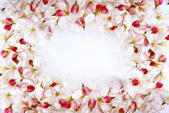 Cherry blossom petals frame Stock Photo