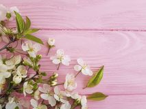 Cherry blossom on pink wooden beauty decoration color border retro design pastel frame background. Cherry blossom pink wooden frame background design pastel Stock Photography