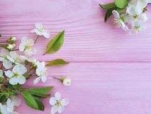 Cherry blossom on pink wooden design pastel frame background. Cherry blossom pink wooden frame background design pastel royalty free stock image