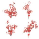 Cherry blossom plants Stock Photography