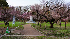 Cherry blossom and religious statue at Maruyama Park. SAPPORO, JAPAN -APRIL 25, 2016: Cherry blossom around religious statue at Maruyama Park. Here is very Stock Photography