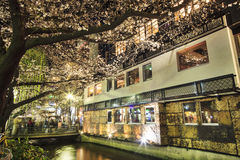 Cherry blossom on river side in Kyoto. Royalty Free Stock Photos