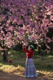 Cherry Blossom rosado Fotografía de archivo