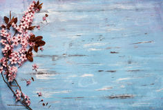 Cherry blossom on rustic wooden backkground Royalty Free Stock Photo