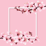 Cherry blossom. Sakura branch with pink flowers on white frame and sweet pink background. Image of springtime. Vector illustration stock illustration