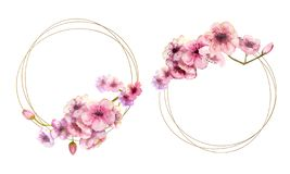 Free Cherry Blossom, Sakura Branch With Pink Flowers On Gold Frame And Isolated On White Background. Image Of Spring. 2 Frames With Stock Images - 162104404