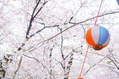 Cherry Blossom Sakura em Japão imagem de stock