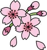 Cherry blossom sakura flower Stock Photos