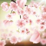 Cherry blossom, sakura flowers. EPS 10 Stock Photo