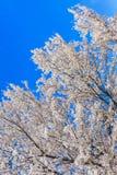 Cherry Blossom, Sakura season in Japan. Royalty Free Stock Image