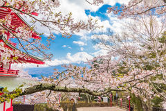 Cherry blossom sakura in spring season with Red pagoda in park and Mt. fuji background Stock Photo