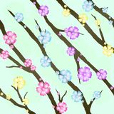 Cherry blossom seamless background Royalty Free Stock Image