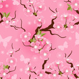Cherry blossom seamless flowers pattern Stock Photos