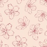 Cherry blossom seamless pattern. Royalty Free Stock Images
