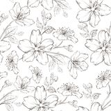 Cherry blossom seamless pattern. Royalty Free Stock Image