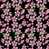Cherry Blossom Seamless Pattern Royalty Free Stock Image