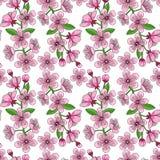 Cherry Blossom Seamless Pattern Stock Photos