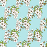 Cherry blossom seamless pattern. Floral  design for textil Stock Photos