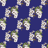 Cherry blossom seamless pattern Stock Photography