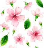 Cherry blossom. Seamless pattern of pink flowers and green leave Royalty Free Stock Photo