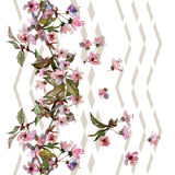Cherry blossom seamless pattern. Royalty Free Stock Photo