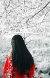 Cherry blossom season. Asian girl in red kimono with an umbrella under the cherry trees Stock Photo