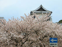 Cherry blossom season in Japan Royalty Free Stock Image