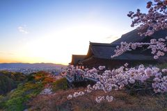 Cherry Blossom Season på Kyoto Japan royaltyfri bild
