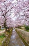 Cherry Blossom Season på Osaka royaltyfri bild