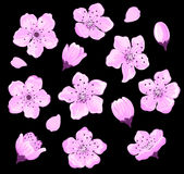Cherry Blossom Set Stock Photo