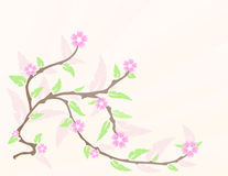 Cherry blossom in spring Royalty Free Stock Photography