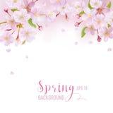 Cherry Blossom Spring Background Photos libres de droits