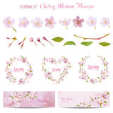 Cherry Blossom Spring Background and Design Elements Royalty Free Stock Images