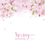 Cherry Blossom Spring Background Royalty Free Stock Photos