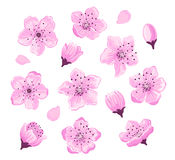 Cherry blossom spring flowers set. Vector illustration Stock Photos